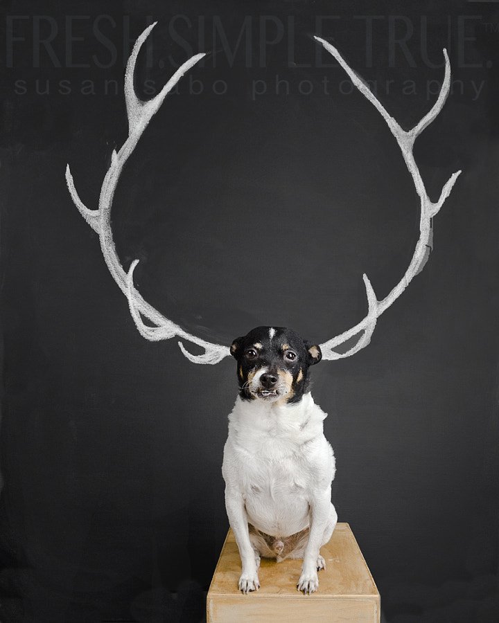 Antlers have been very popular for the last couple of years. I'm glad the fake ones are the most popular. After I made the wings backdrop (which I'm still shooting), I thought it would be fun to do something sorta kinda similar. So I did this. Not photoshopped, just carefully aligned with a treat :)