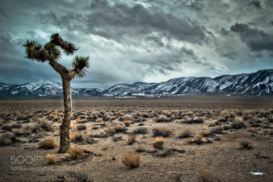 Photograph Joshua Tree by Joseph Fronteras on 500px