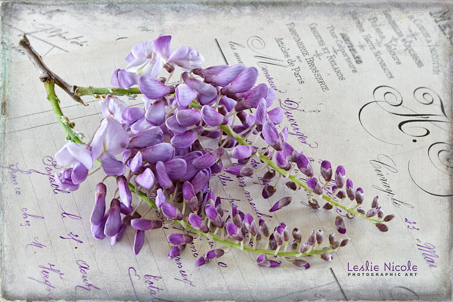 Photograph Vintage Wisteria by Leslie Nicole on 500px