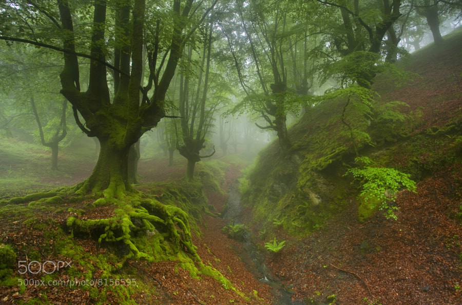 Photograph Into the forest by David Cidre on 500px