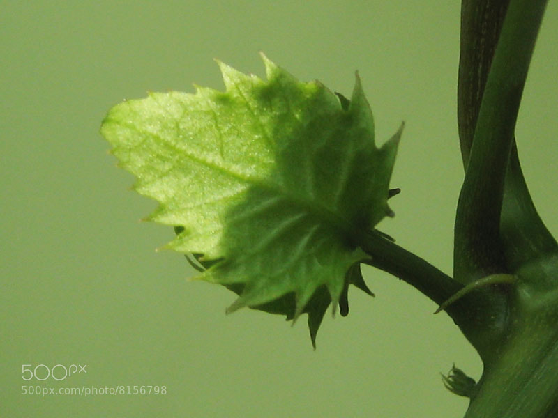 Photograph green on green by Wigati Anandani on 500px