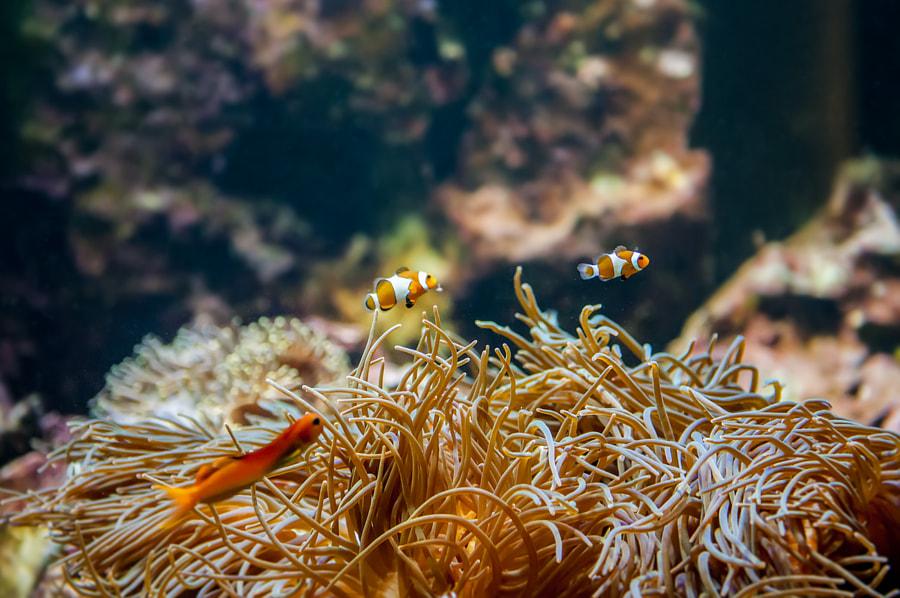 Finding Nemo by Michał Łotocki on 500px.com