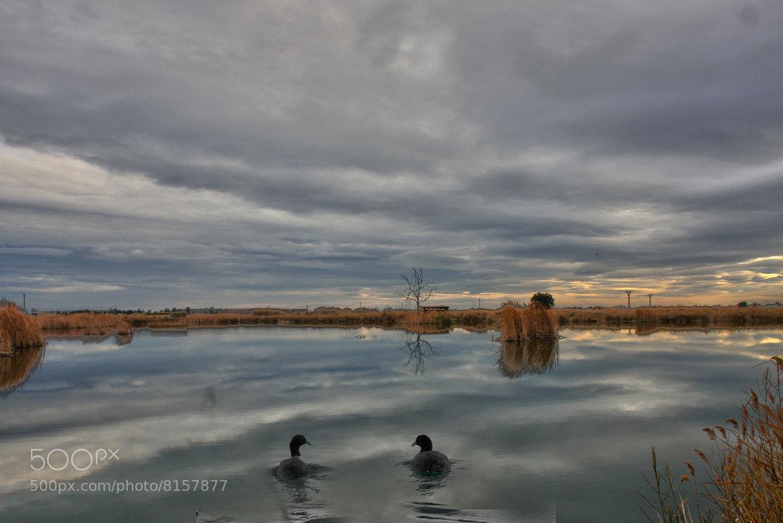 Photograph patos by juan  rodrigo legua on 500px