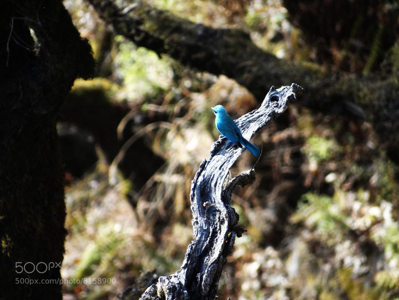 Photograph Blue!! by Harivansh Singh on 500px