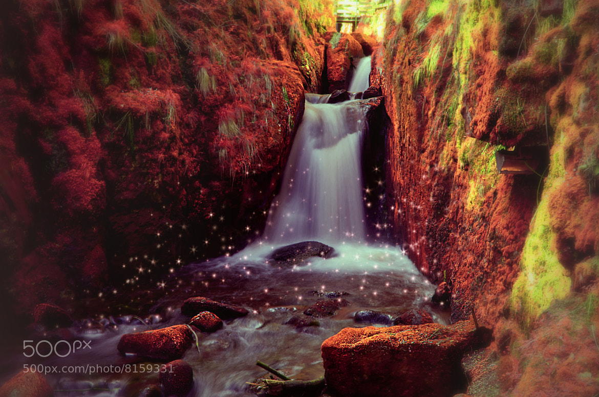 Photograph Only in Fairyland by Nouran Abu Summaqa on 500px