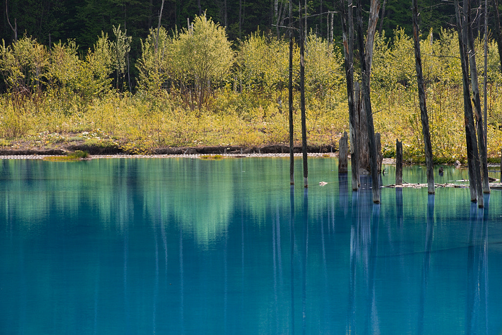 Photograph Blue Pond-May  by Kent Shiraishi on 500px