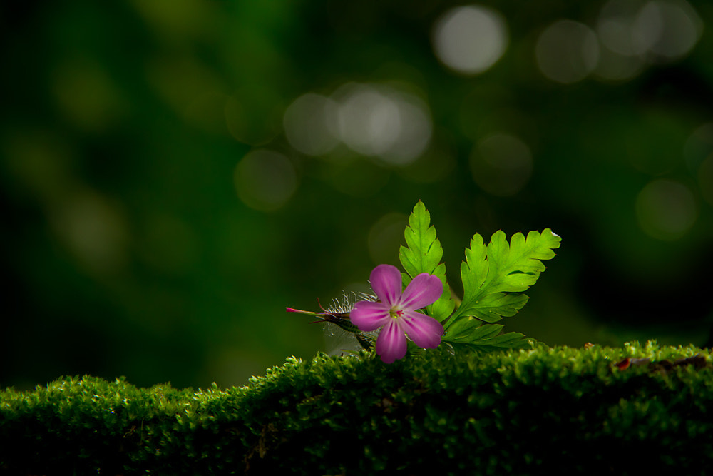 Photograph somewhere in the forest by Domen  Dolenc on 500px