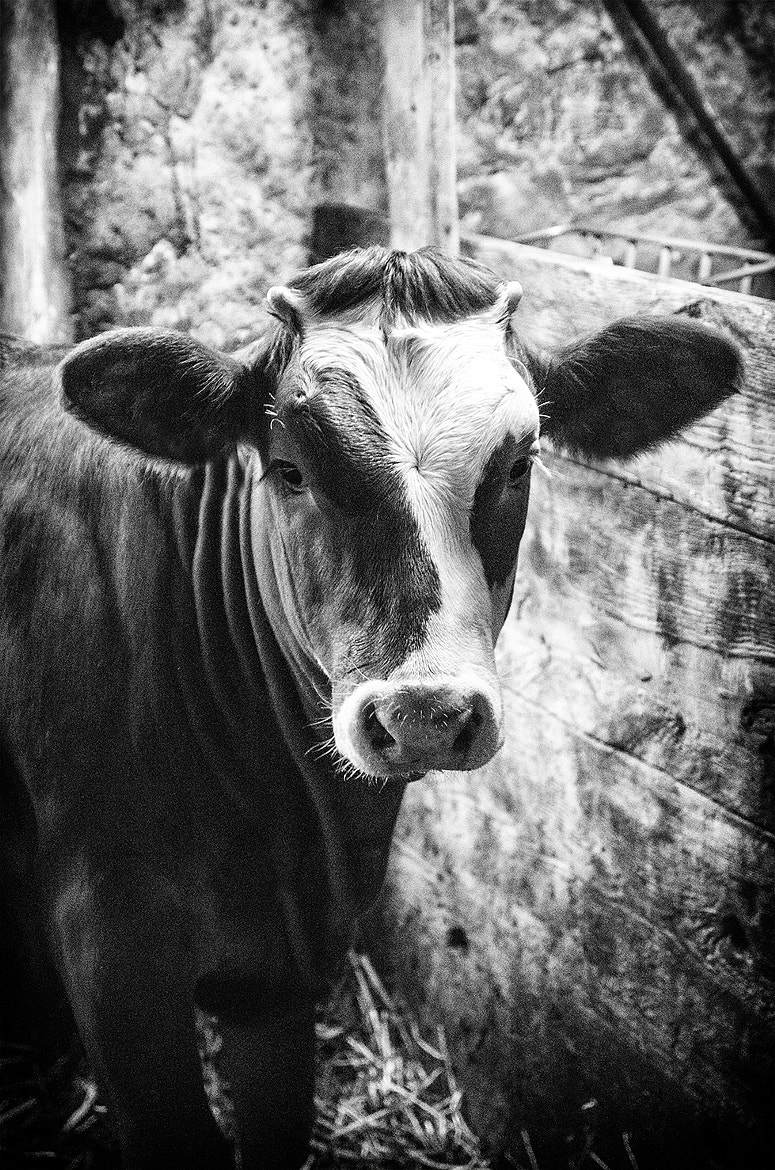 Photograph At the Milkbar by Chris Maven on 500px