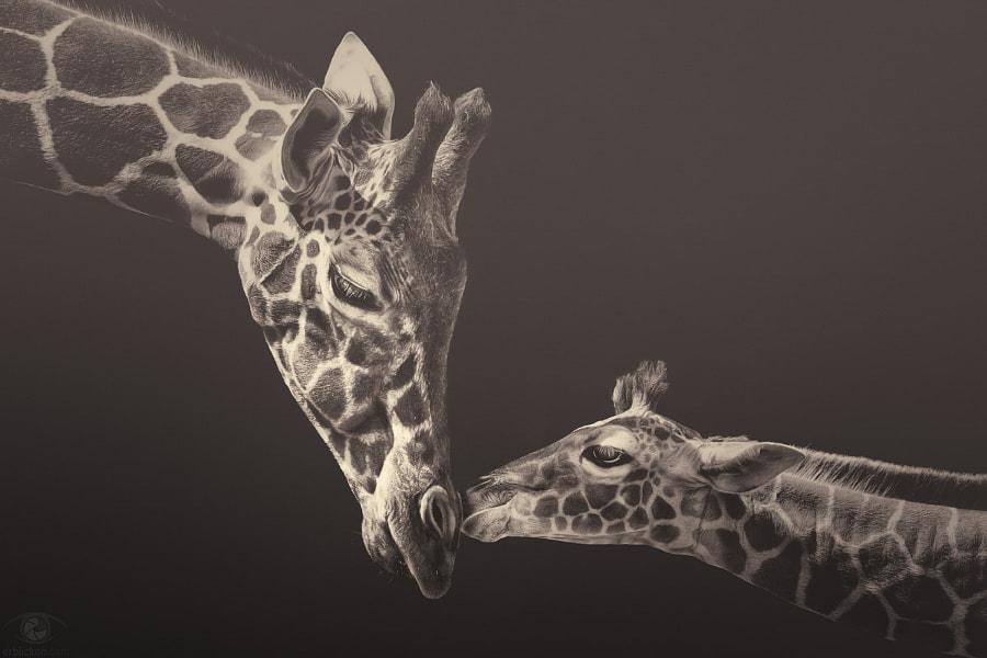 African souls: XIV by Manuela Kulpa on 500px.com
