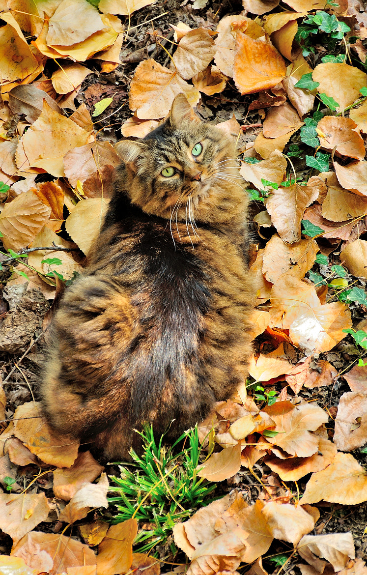 Photograph The Cat and the Leaves. by Renato Pantini on 500px