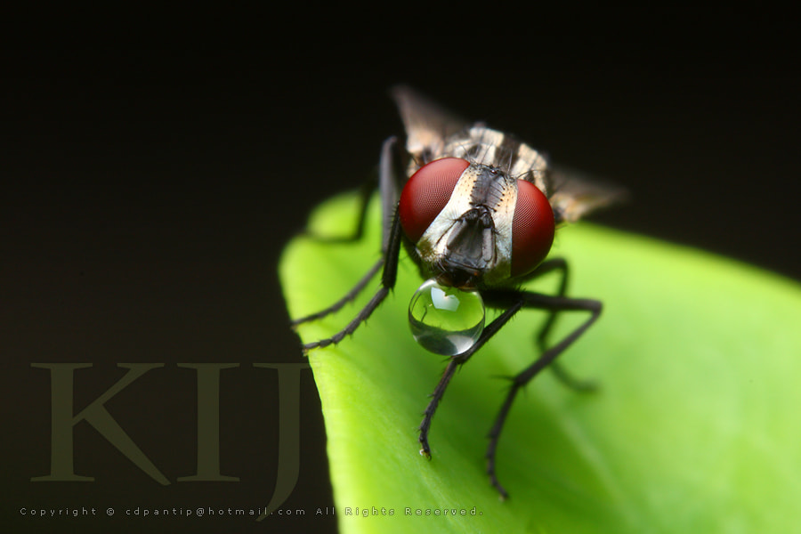 Photograph The fly after rain by cyberspace on 500px