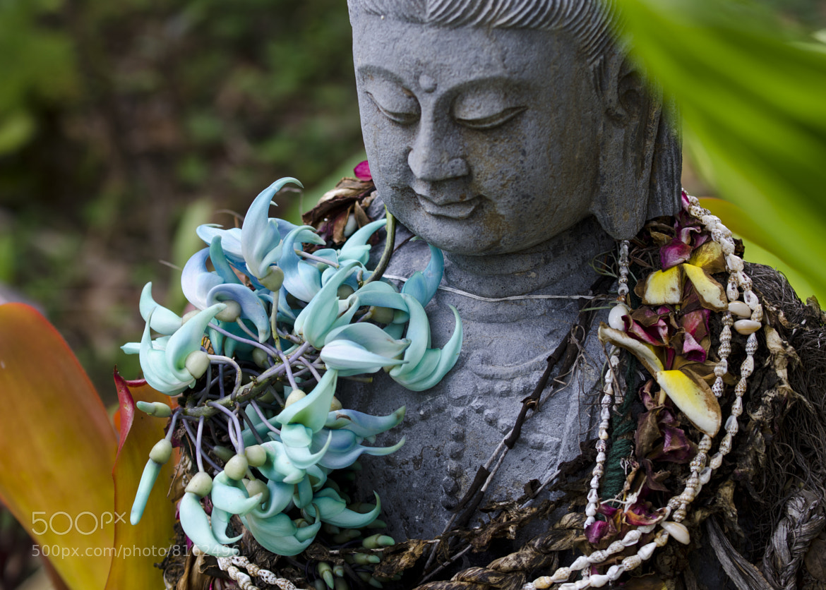 Photograph The Admiration of the Jade by Jeffrey Bombardier on 500px
