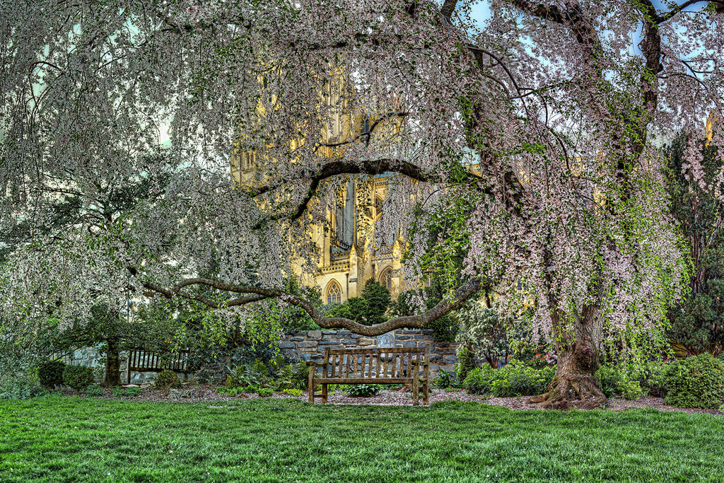 Photograph Cherry Blossoms at the Washington National Cathedral by Metro DC Photography on 500px