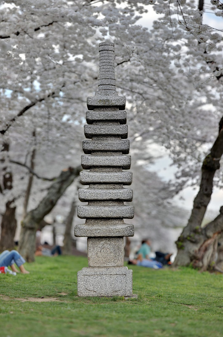 Photograph Japanese Pagoda at the Cherry Blossoms, Washington DC by Metro DC Photography on 500px