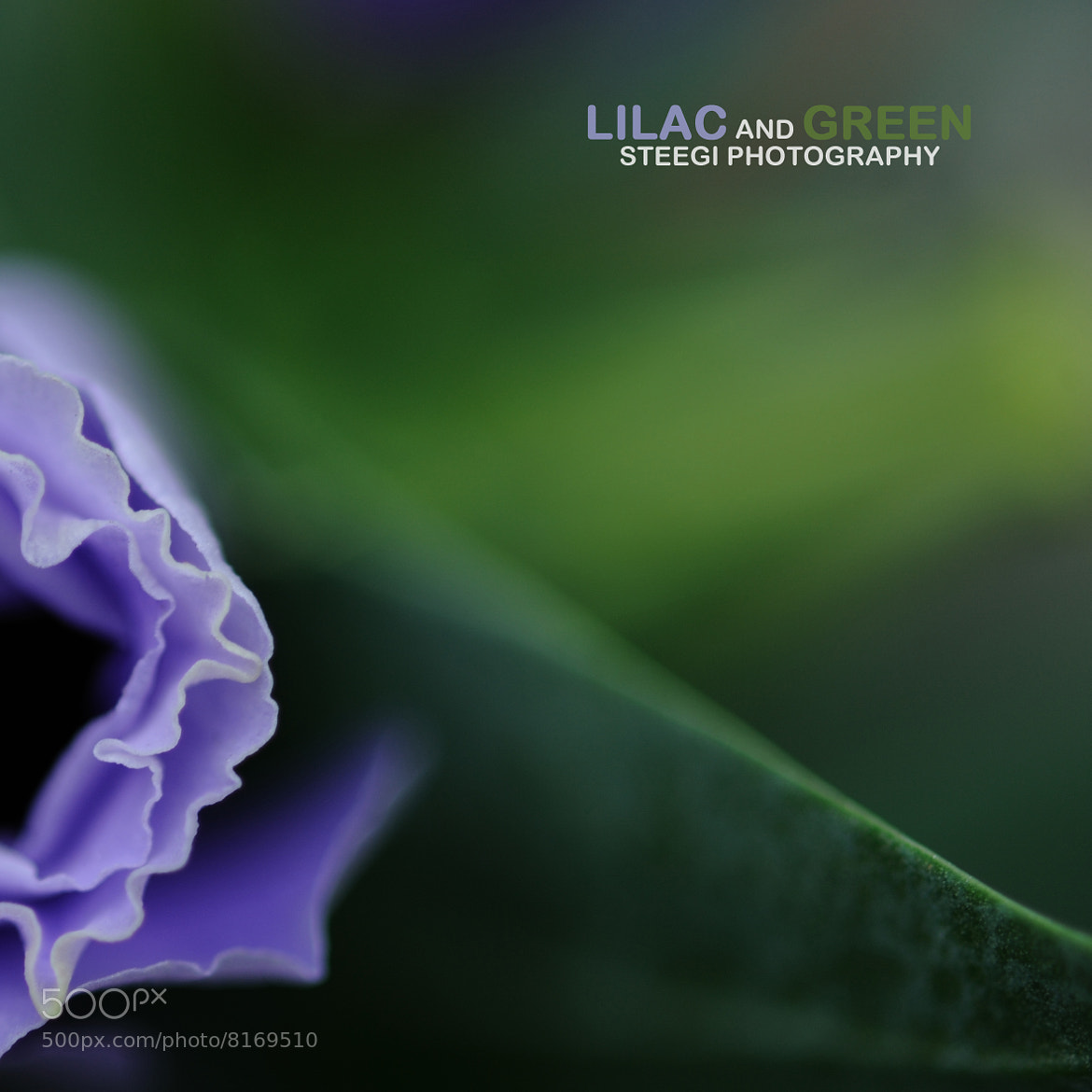Photograph Lilac and Green by Andreas Steegmann on 500px