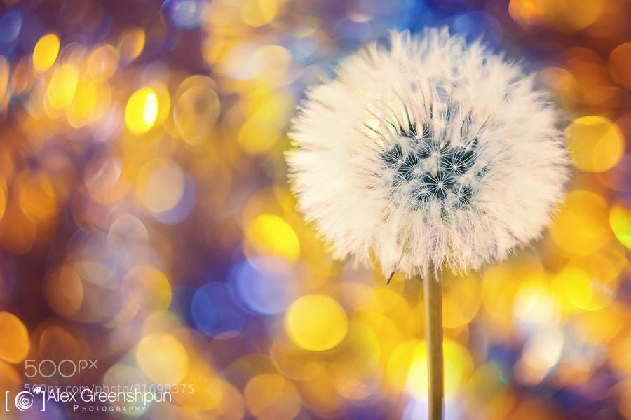 Make a Wish by Alex Greenshpun