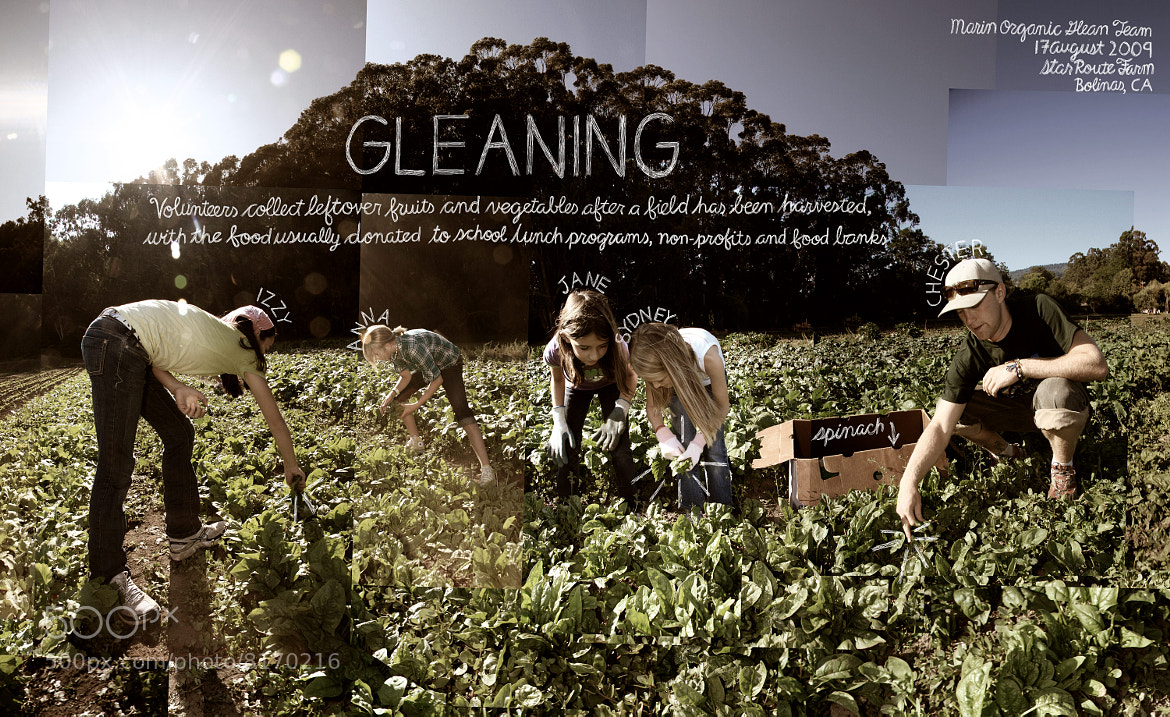 "Photograph #2 ""Gleaning"" by Douglas Gayeton on 500px"