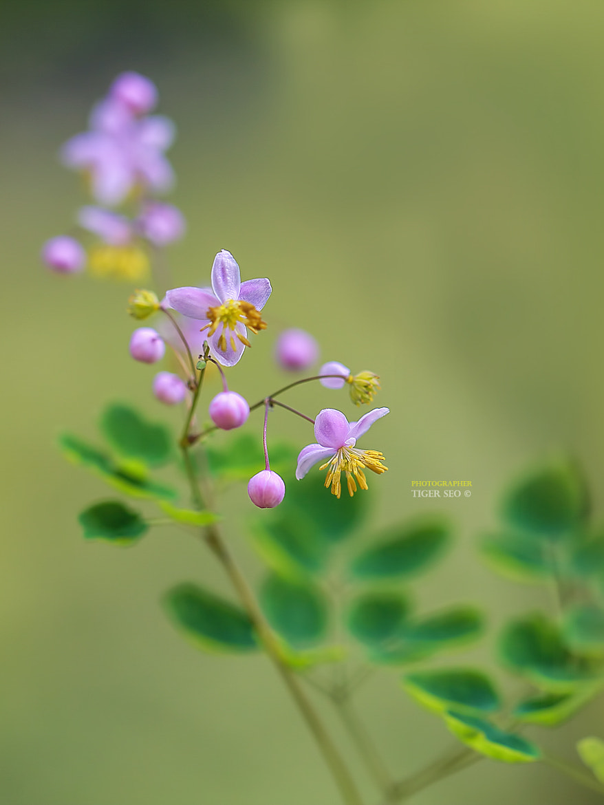 Photograph Beanpole's Doll by Tiger Seo on 500px