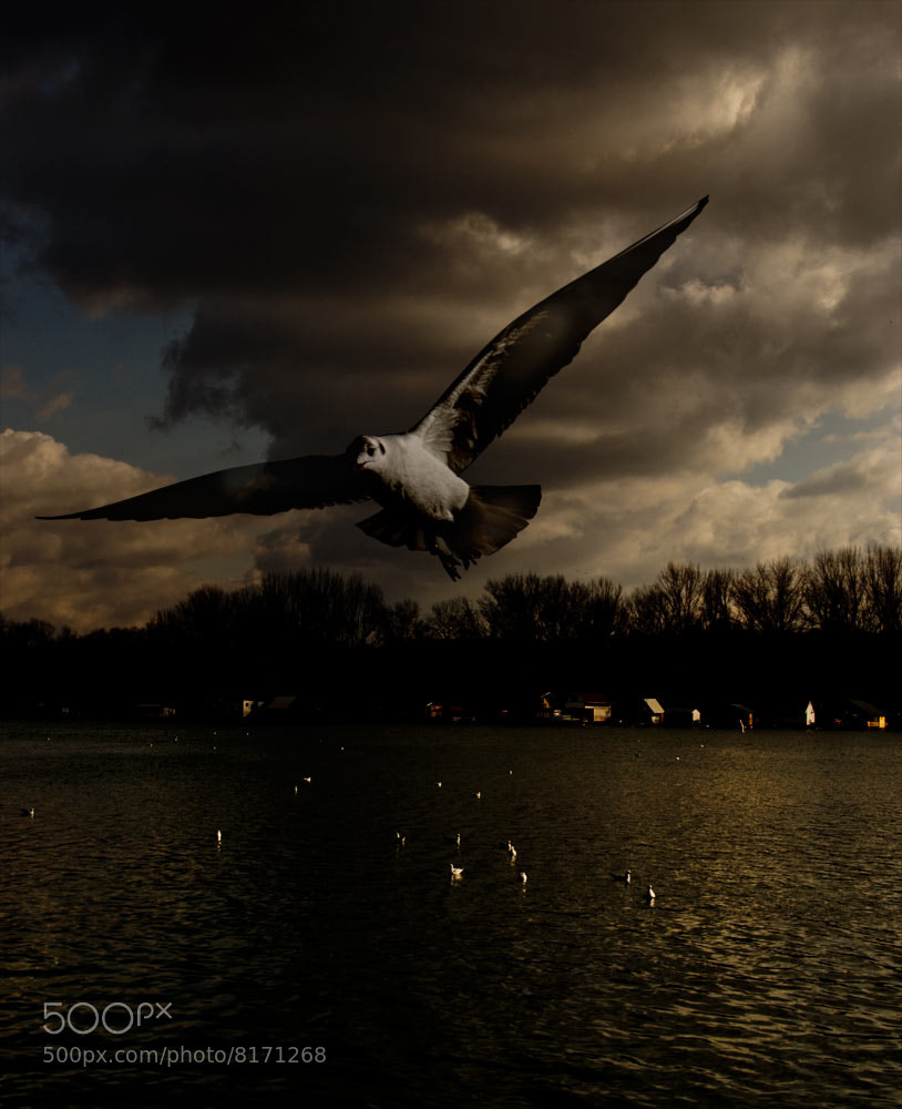 Photograph Untitled by Vladimir Jablanov on 500px