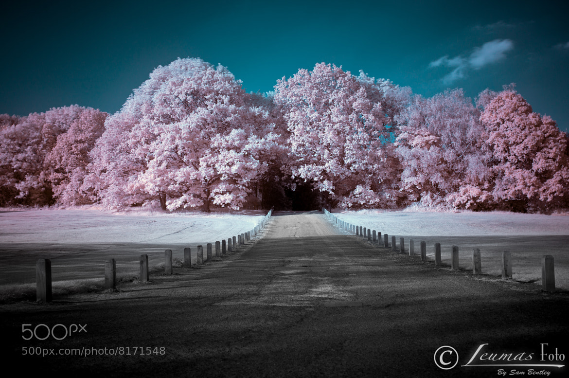 Photograph Path to the trees n Infrared by Sam Bentley on 500px