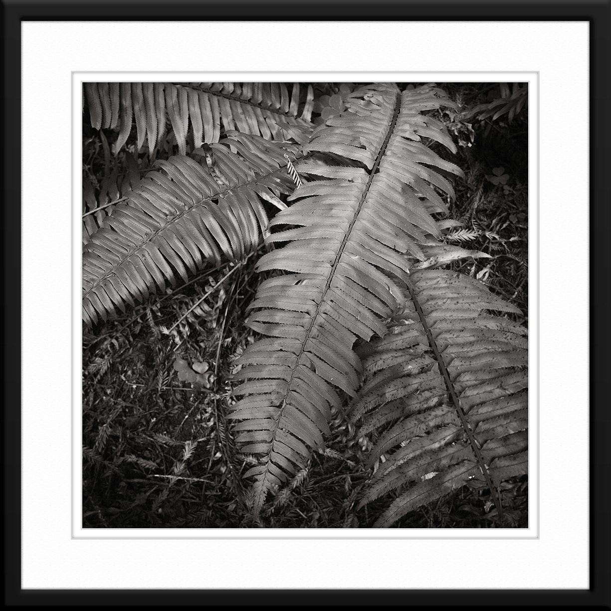 Photograph Luminescent Fern by Dave Keating on 500px