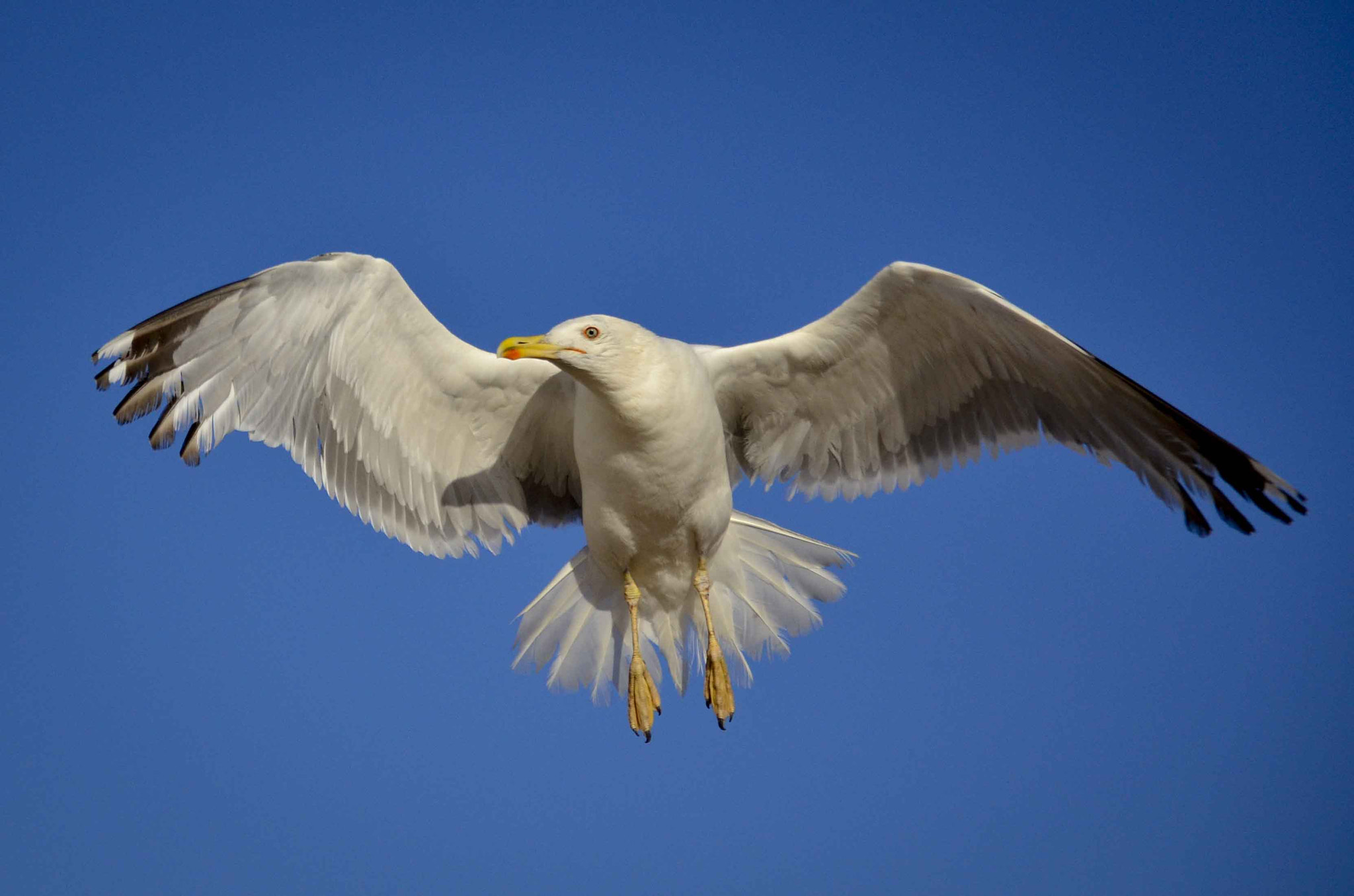 Photograph gaviota by Miguel Bustos on 500px