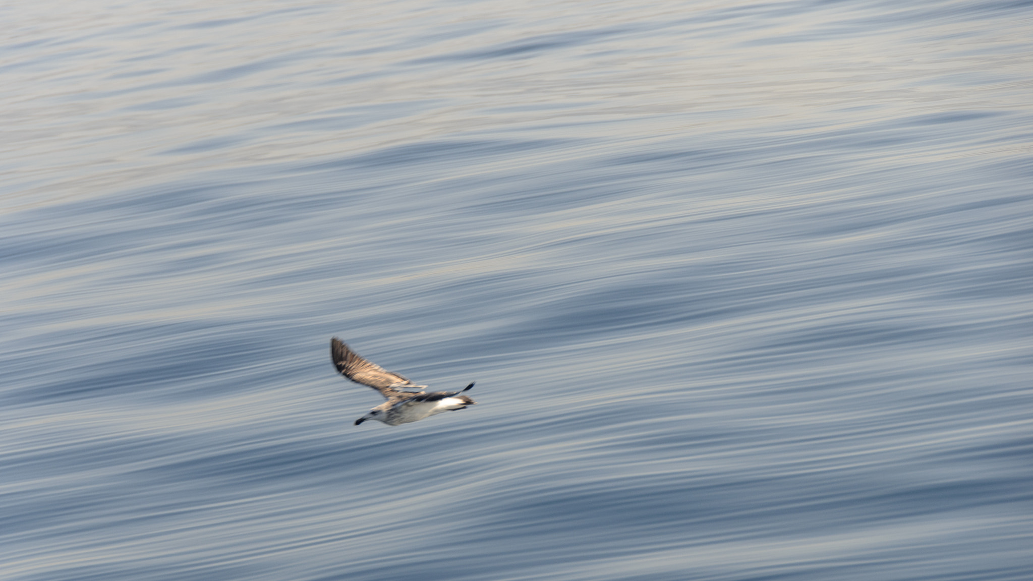 Photograph Seagull at full speed by Arend van der Walt on 500px