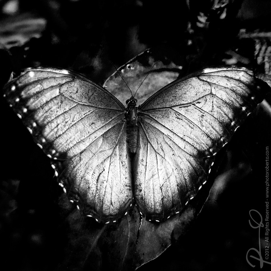 Photograph Silver by Roberto Ojeda on 500px