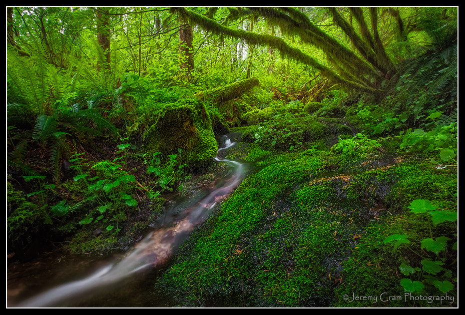 Photograph Mossy Stream... by Jeremy Cram on 500px