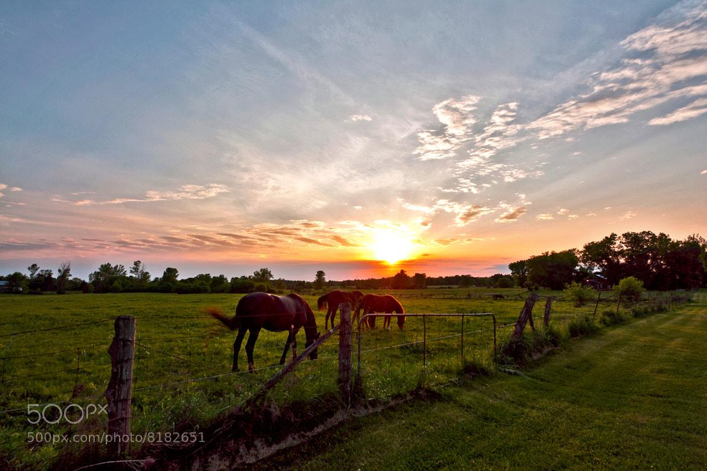 Photograph Sunset Dinner by Matt Molloy on 500px