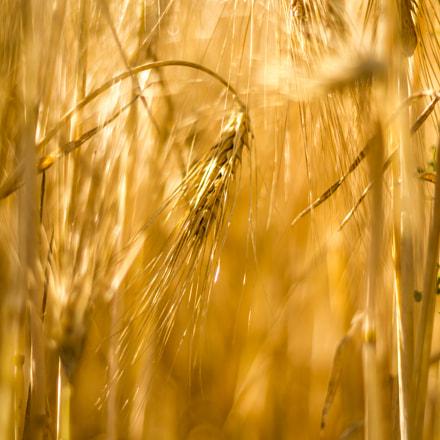 Harvest #2