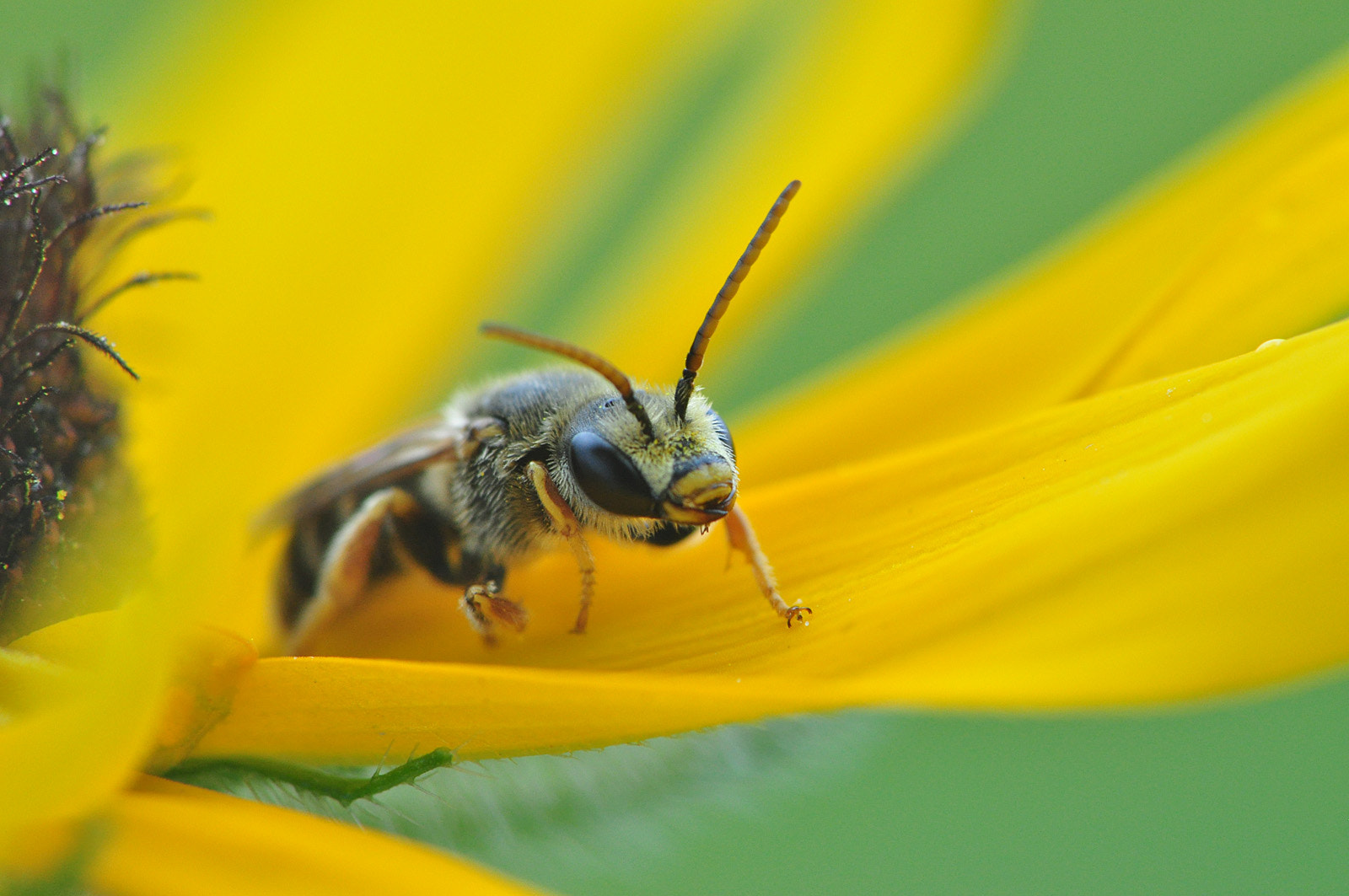Photograph Unknown Bee Species by Suzanne Williams on 500px