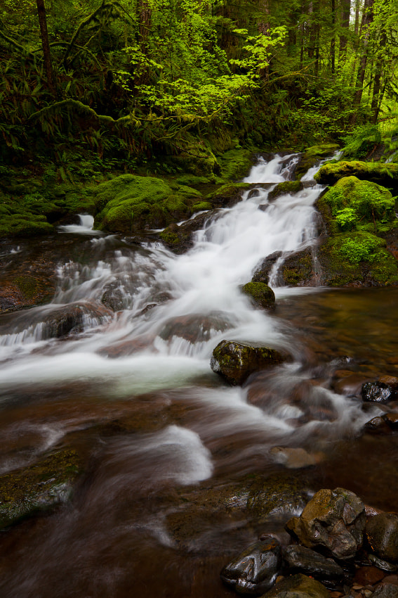 Photograph Cascades by Ned Fenimore on 500px