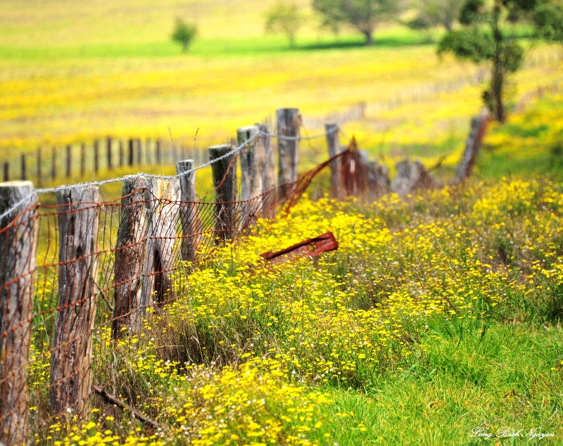 Photograph field along Saddle Road, Hawaii  by Long Bach Nguyen on 500px