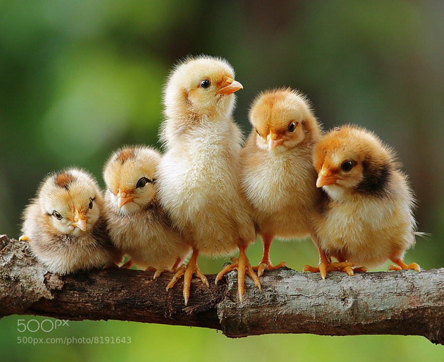 Photograph to be a leader by Prachit Punyapor on 500px