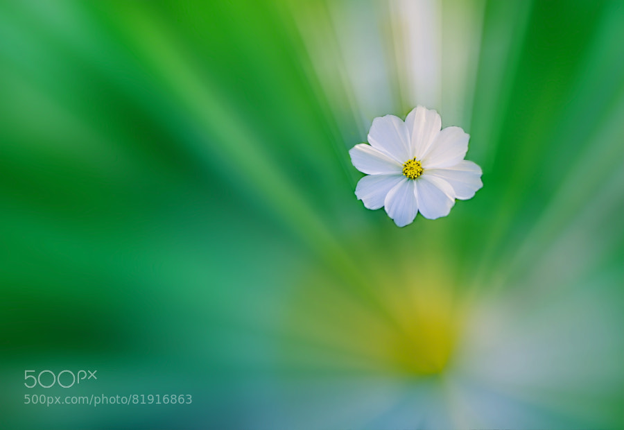 Photograph A Flower In Dream! by Aziz Nasuti on 500px