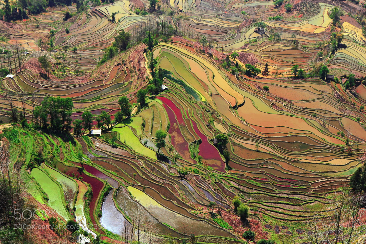 Photograph terraces of Laohuzui, Yuanyan by 铁汤  on 500px