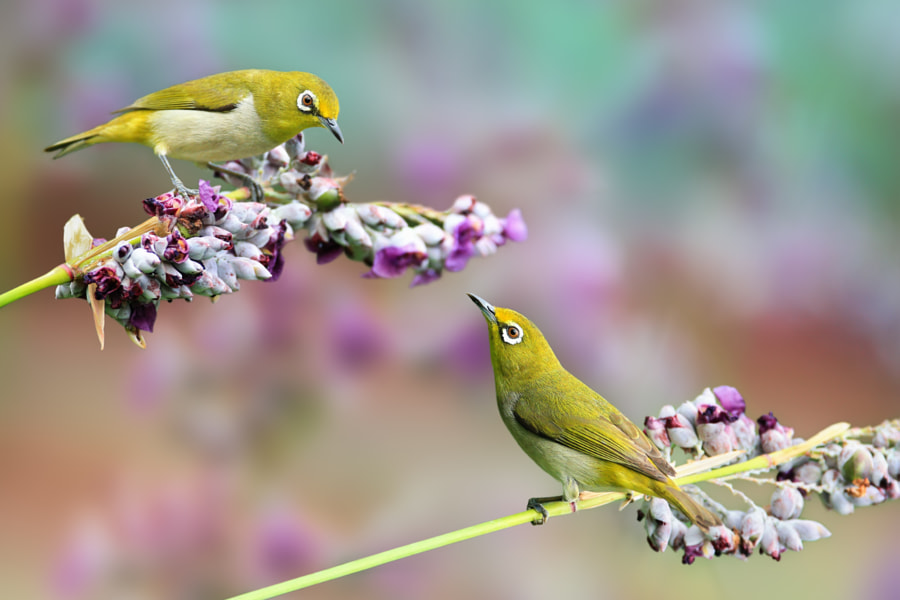 Conversation by Sue Hsu on 500px.com