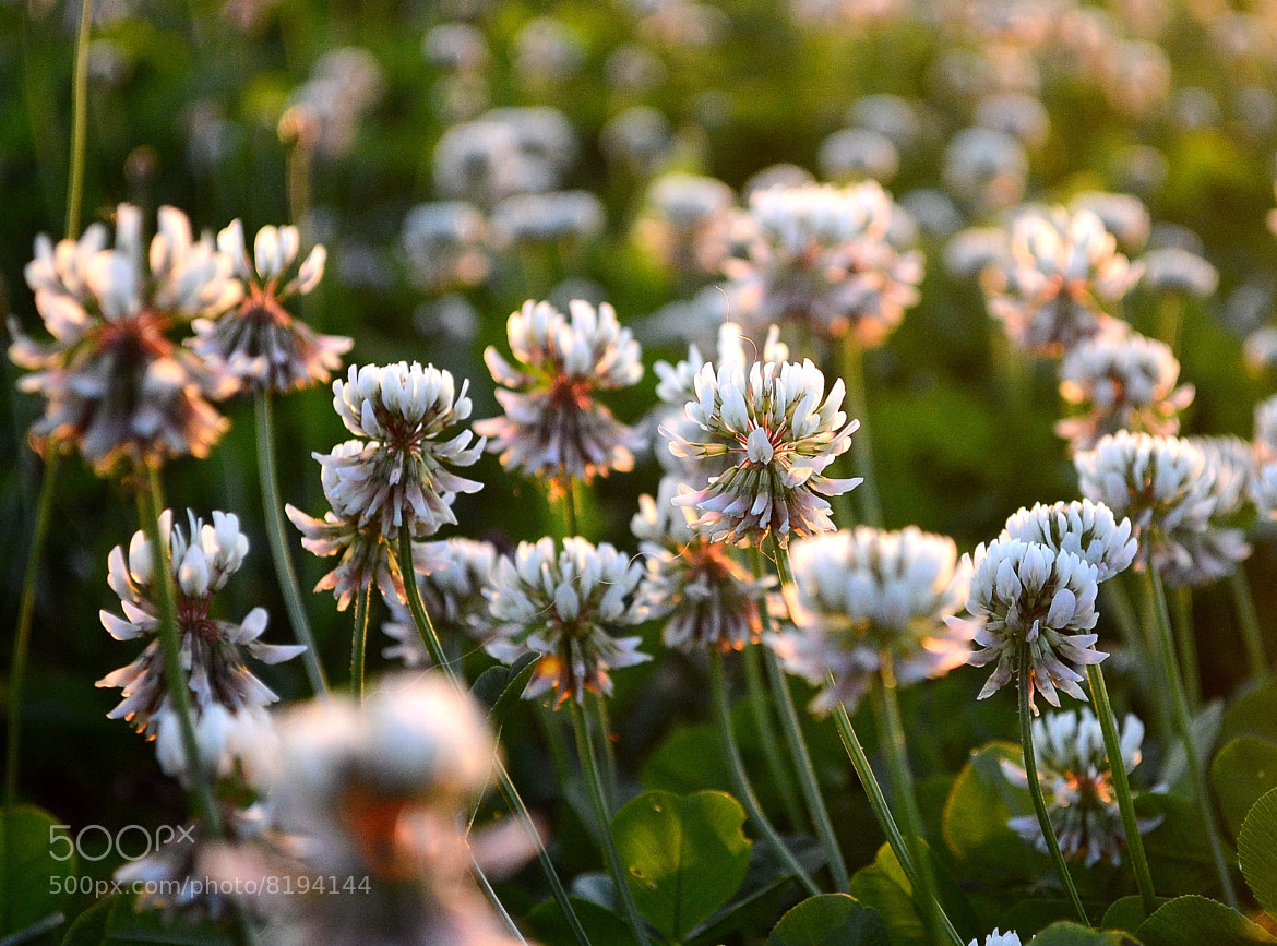 Photograph Some flowers by Coen Janse on 500px