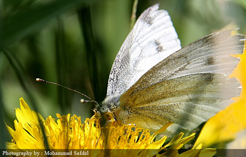 Photograph White Butterfly by Mohammad Safdel on 500px