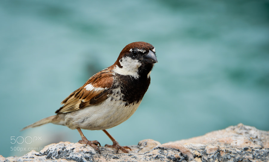 A bird closeup