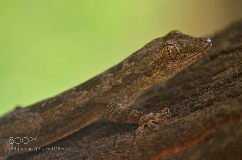 Photograph Lizard by Kumaran Shanmugam on 500px