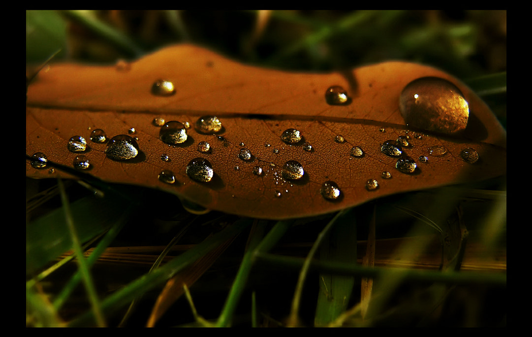 Photograph Drops  by EMERALD WAKE © on 500px