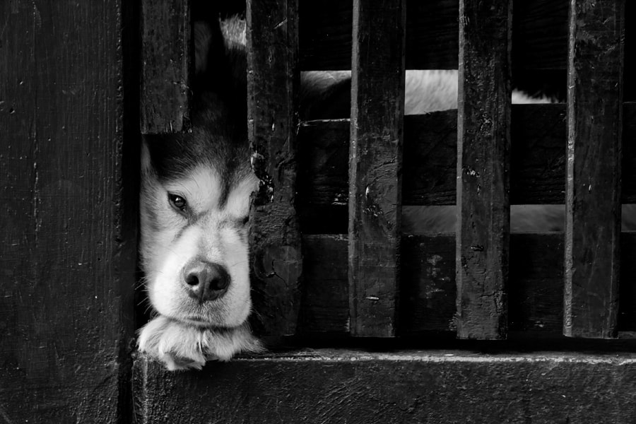 Photograph Let me out by Uroš Kenda on 500px