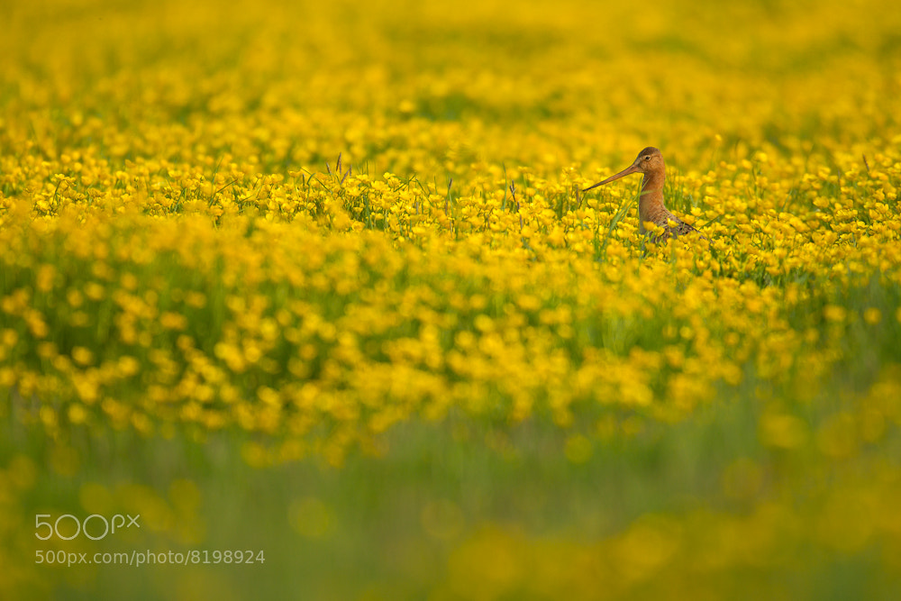 Photograph Yellow by René Visser on 500px