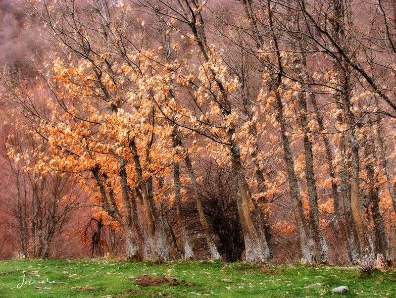 Photograph El bosque / The forest by Juan Carlos Balbas on 500px
