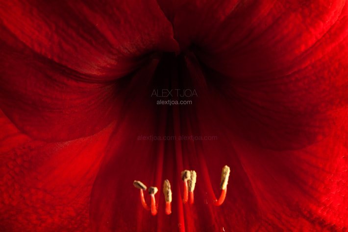 Photograph The lady in red by Alex Tjoa on 500px
