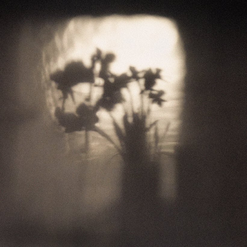 Photograph Intangible by Linda Wride on 500px