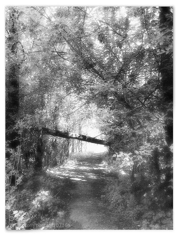 Photograph там, на неведомых дорожках.. by Stanislav N. on 500px