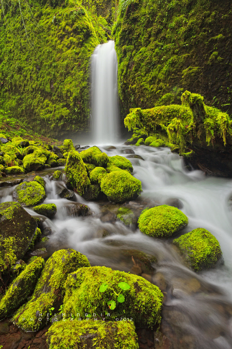 Photograph moss by Helminadia Ranford on 500px